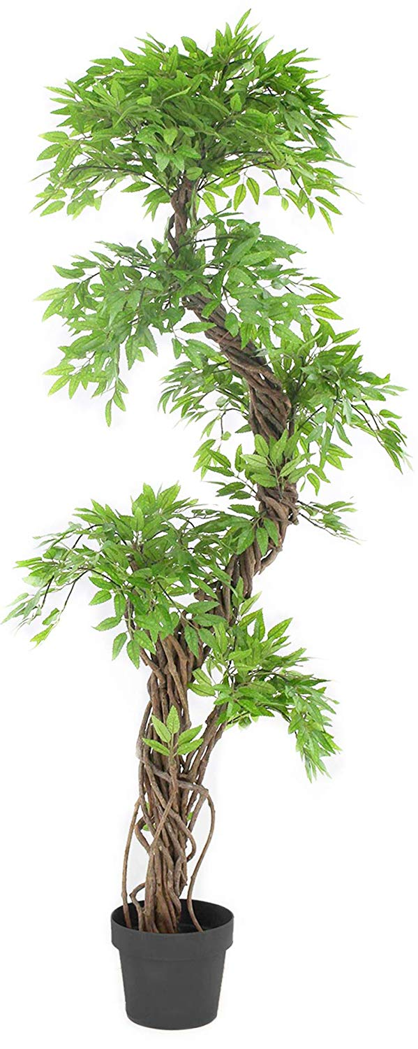 Luxury Japanese Fruticosa Tree