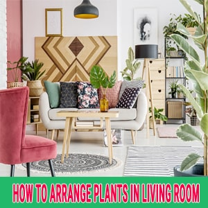 how to arrange plants in living room
