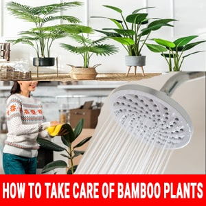 How to take care of bamboo plants